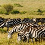 Maasai Mara Safari – Holiday Part 2