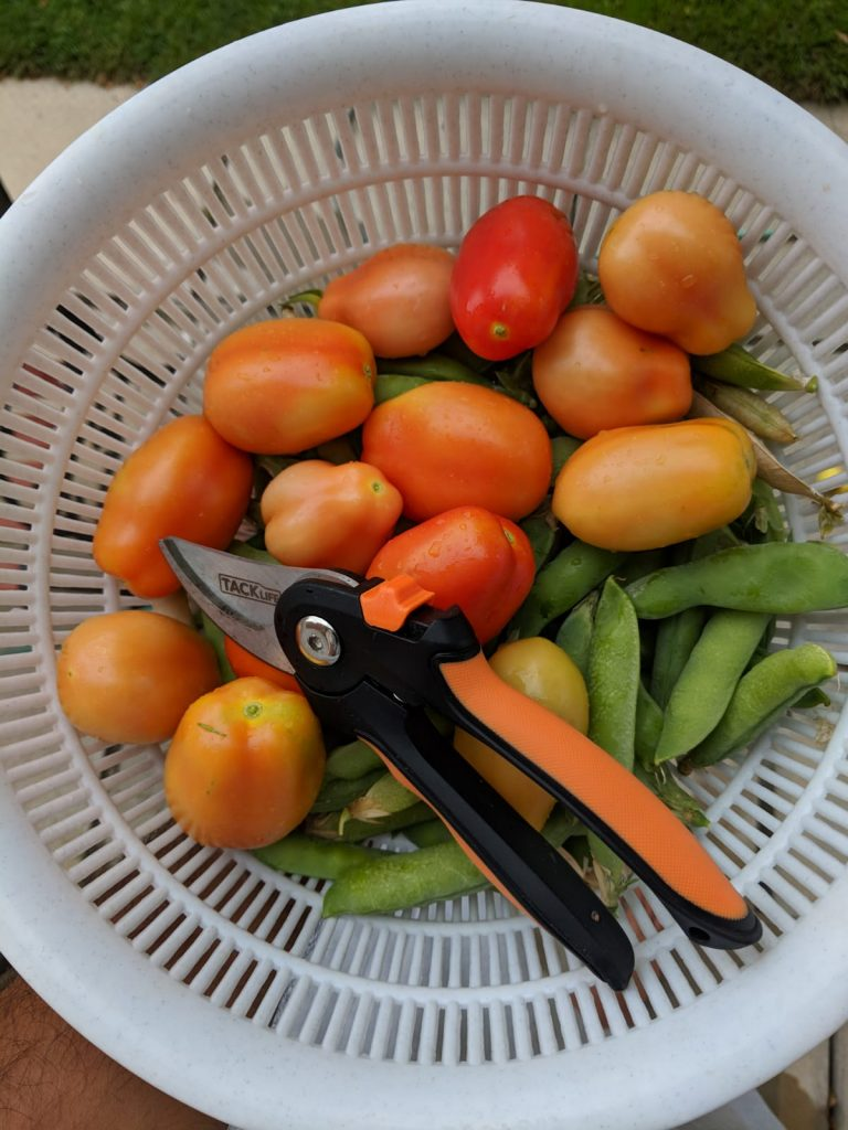lessons learned from our first ever backyard vegetable garden