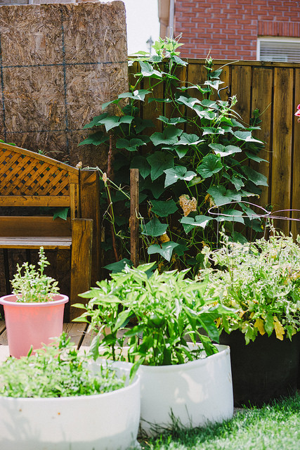 Lessons learned from out first ever Backyard Vegetable Garden