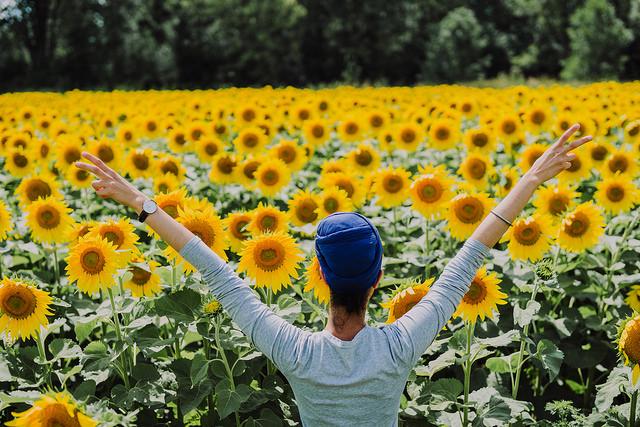 bogle seeds sunflower farm review
