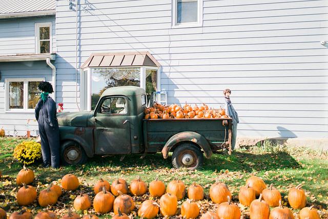 Andrew's Scenic Acres Pumpkin Patch